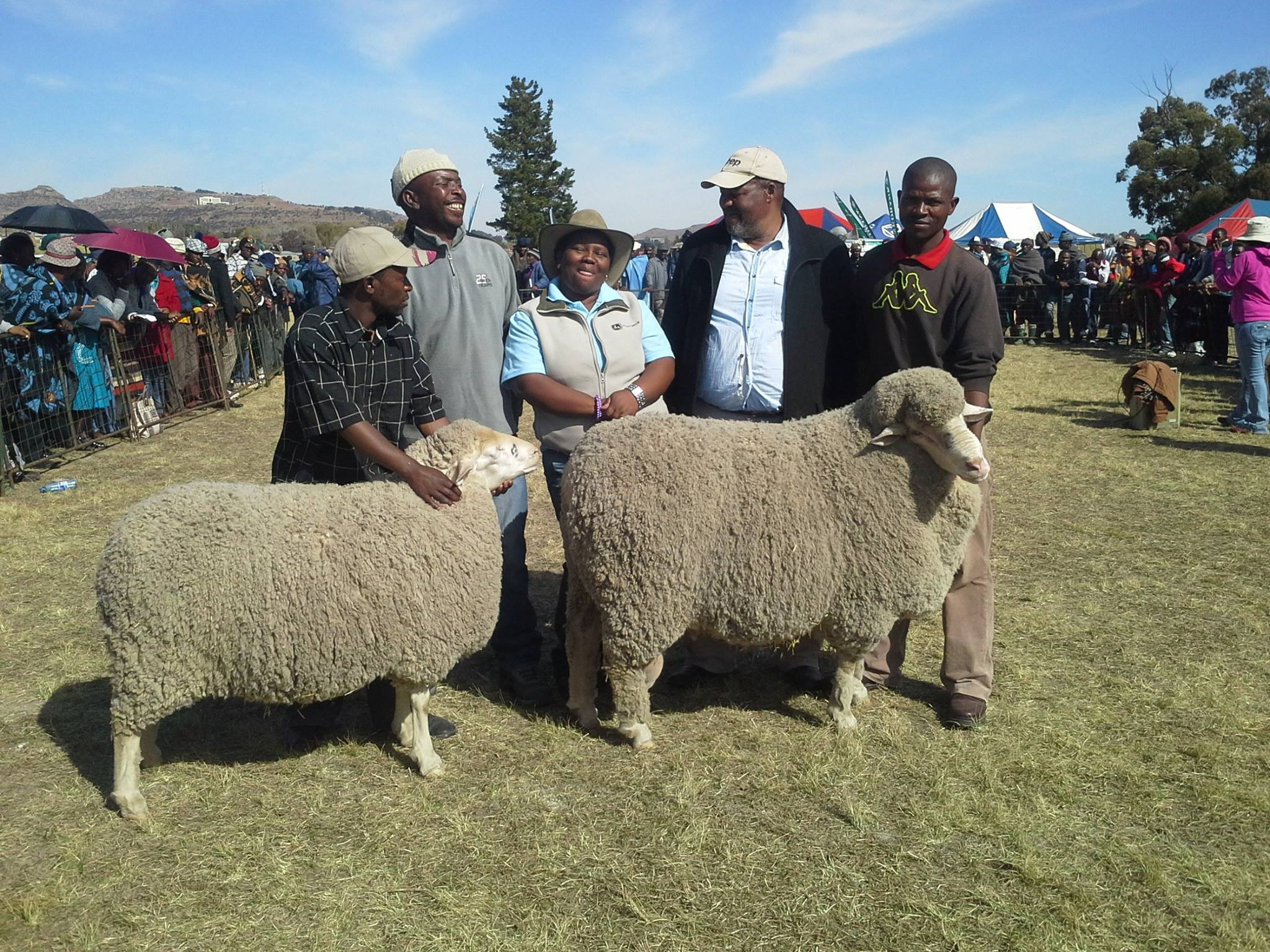sheep breeding lesotho
