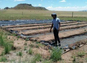 Leutsa Khobotlo of Greenlife Farm running his field work